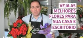 DICAS DE FLORES