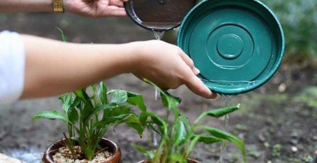 Alerta Dengue: Verão exige cuidado redobrado.
